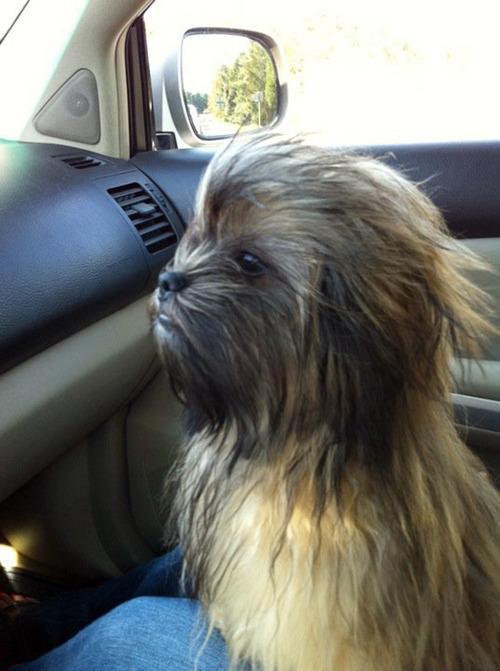 El perro de Han